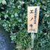 H2O_HoriHori